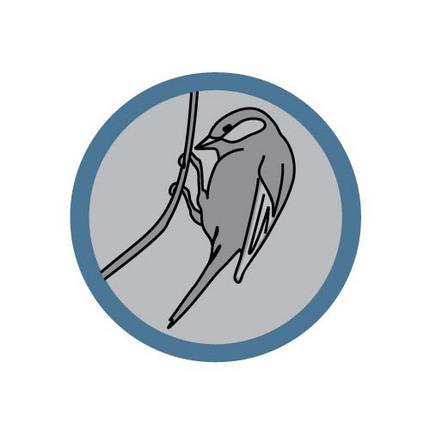 fuglekjennskap